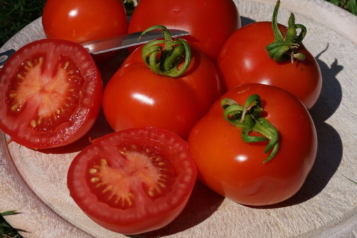 Die Tomate Iris ist eine alte deutsche Tomatensorte.