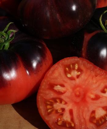 Tomate Ozark Sunrise stammt aus dem Ozark-Gebirge.