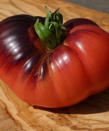 Die Tomate Ozark Sunrise ist robust und trägt viele Früchte.