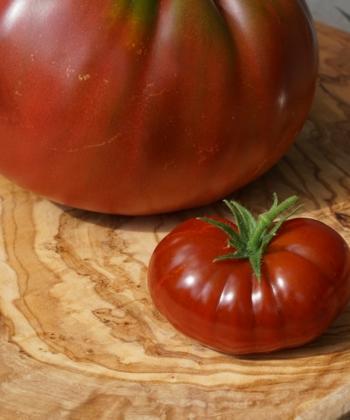 Größenvergleich der Tomate Petit Chocolate und einer echten Fleischtomate.