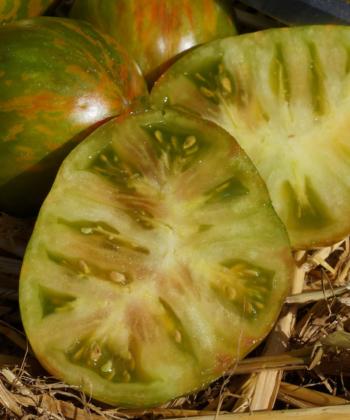 Tomate Victorias Smile: Bunt, lecker, aromatisch.
