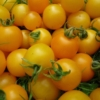 Tomate Tumbling Tom Yellow