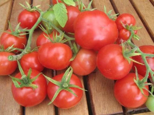 Tomate Urtomate