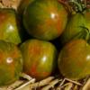 Victorias Smile trägt lange und reichlich Tomatenfrüchte.