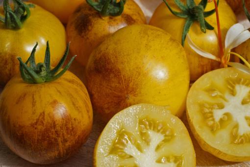 Wegen dem hohen Ertrag sollte die Tomate Golden Tiger gestäbt werden.