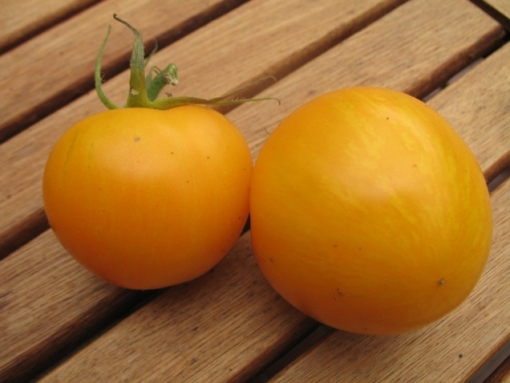 Tomate Yellow Zebra