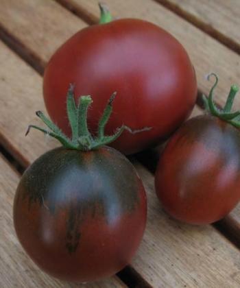 Tomate Black Appel