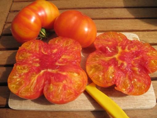Tomate Golden Cherokee