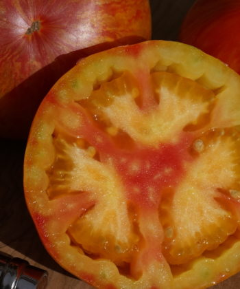 Auch der Geschmack der Tomate 'Beauty Queen' ist sehr gut.