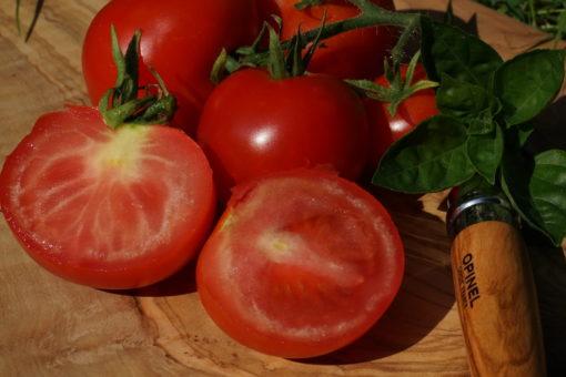 Die Früchte von 'Dansk Eksport' sind mittelgroß, rot und rund.