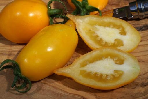Die Stabtomate 'Akmore Treasure' bringt lange hellgelbe Früchte hervor.