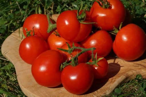Eine alte Tomatenorte die historisch in Norddeutschland angebaut wurde, ist 'Dansk Eksport'.